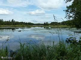 In het prachtige natuurgebied van Gustafborg met z'n heuvels, bossen, weilanden, meren en vrolijke gekleurde huisjes kunt direct vanuit uw huisje van de omgeving genieten, wandelen op de kleine bospaadjes, fietsen in het gebied of varen op het meer. Met een beetje geluk ziet u één van de bosbewoners