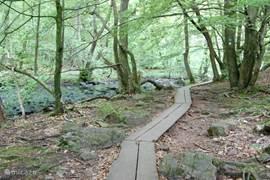 De indrukwekkende natuur van het Söderåsens nationalpark heeft een unieke flora en fauna. In de ravijnen en loofbossen vindt u veel zoogdieren, vogels, reptielen en insecten. U kunt het park wandelend, en fietsend verkennen.