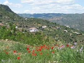 Casa Feliz in zijn omgeving. In het voorjaar als alles prachtig groen is en er allerlei wilde bloemen bloeien (op de voorgrond rode klaprozen).