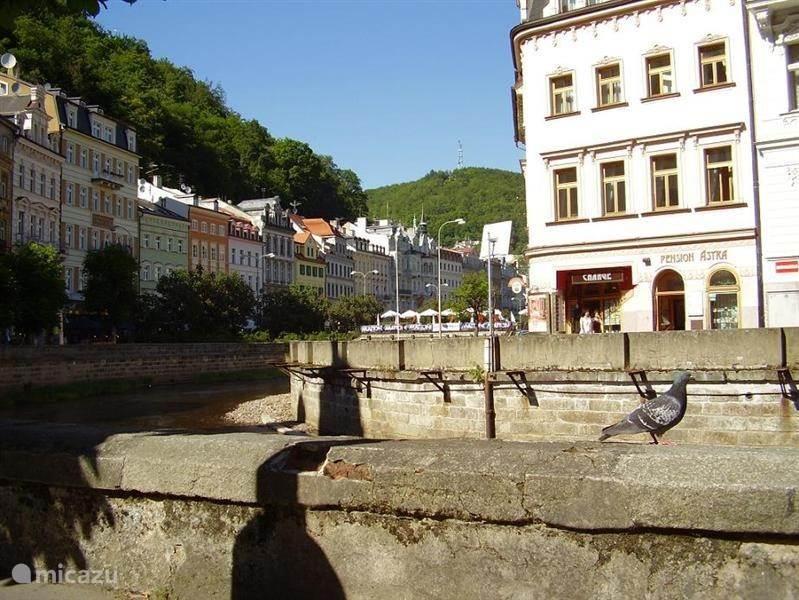 Activiteiten: cultuur & steden