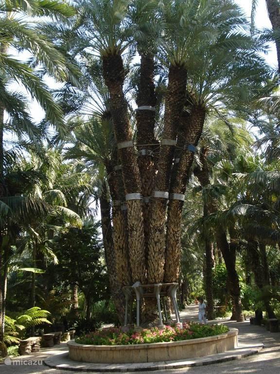 Palmenpark Elche