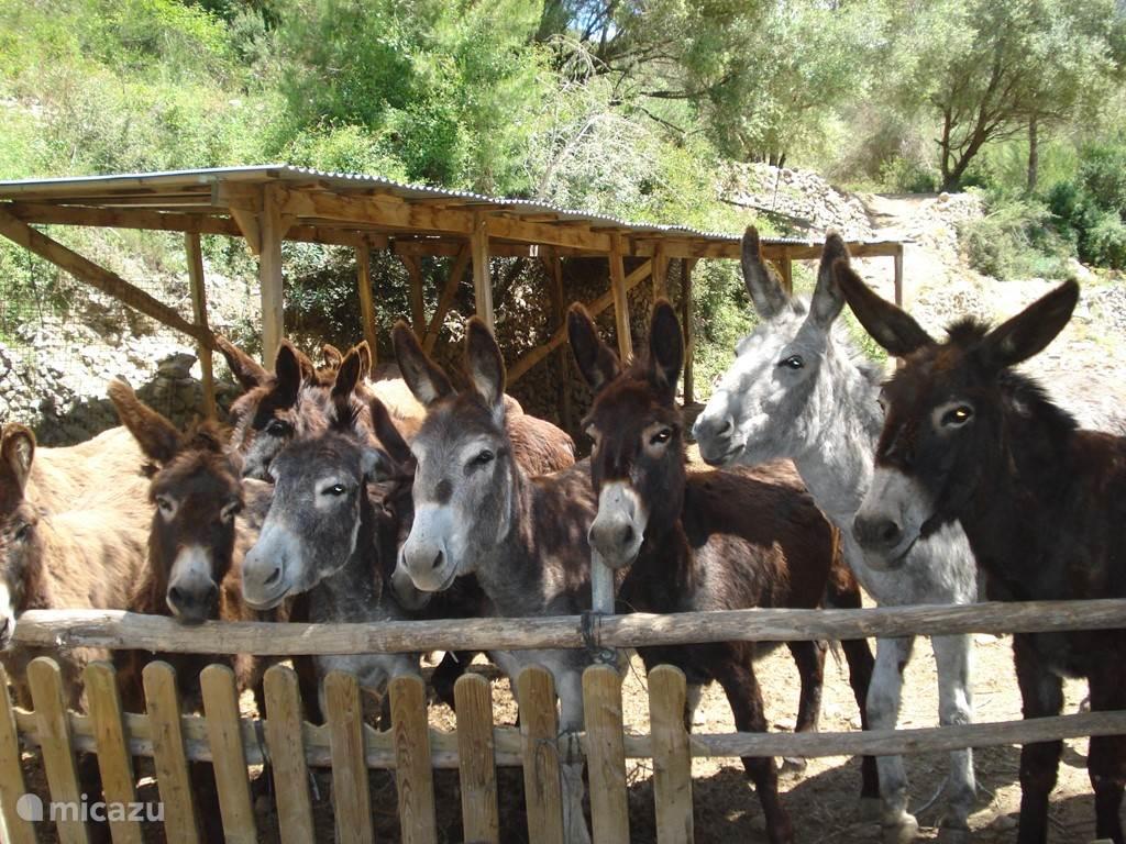Prachtige ezels van het Eselheim Costa Blanca