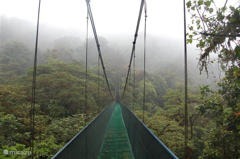 To do in the area: Monteverde