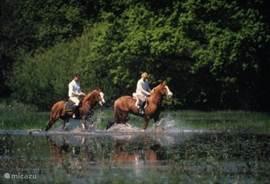 Paardrijden ook naar de Lesse en ook geschikt voor beginners.