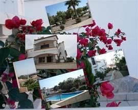Mooie geschakelde vakantie woning aan de Costa Blanca dicht bij de stad Torrevieja. De woning is op 2,5 km van de kust in de wijk Los Dolses en bevindt zich in een rustige omgeving met op loop afstand winkels,restaurants ed.