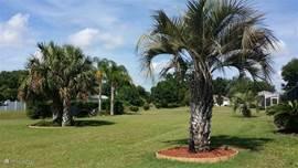 Blik op de royale achtertuin met tropische planten en palmen met 's avonds gezellige sfeerverlichting.