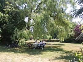 When it is hot sitting in the shade under the weeping willow is very pleasant.
