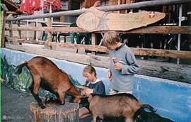 Het geitendorp Les Lindarets,waar alle geiten in de zomermaanden los door het dorpje lopen.In de winter kunt u hier doorheen skiën en gezellig een hapje eten op een van de vele terrasjes. De geiten staan dan natuurlijk lekker warm in de stallen maar ook in de wintermaanden is dit een heel speciaal d