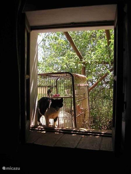 Slaapkamer raam
