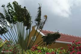 Onze trots: de waaierpalm aan de zijkant van het huis.