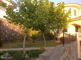 Deel van de tuin voorkant. Bomen met lekkere schaduw.