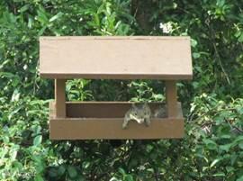 Het huis is voor u alleen, maar de tuin moet gedeeld worden met andere bewoners. Hier de eekhoorn die dol is op vogelvoer. Met dank aan Claudia en Patrick 10 mei 2012.