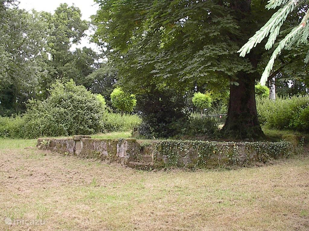 Oude eikenboom