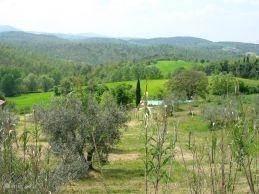 Het buiten zwembad temidden van olijfbomen en het prachtige uitzicht