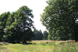 Wandeling vlakbij in boswachterij Odoorn het zwatte gat