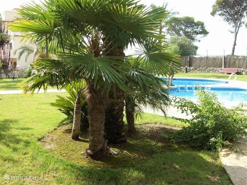 tuin zwembad