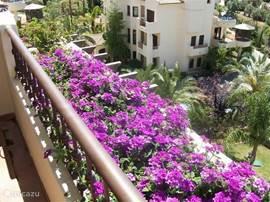Het terras heeft overal bloemen