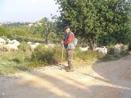 herder met schapen in het veld iets verder dan het appartement