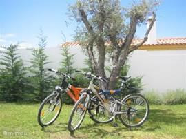 Deze fietsen verhuren wij per week maar ook per dag.