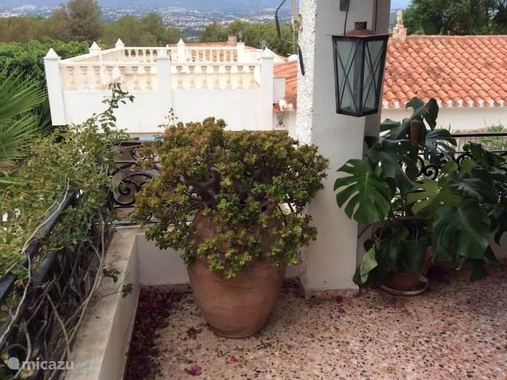 Ook op de veranda planten.