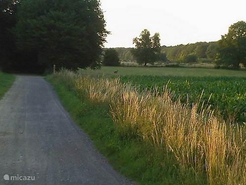 reeen langs de rand van het veld
