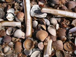 Het zachte strandzand van de Zeeuwse kust is soms toch wat lastig met blote voeten