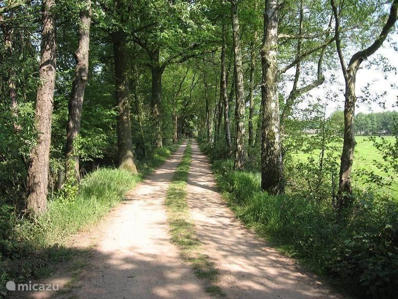 landweg a/d zuidzijde van het bungalowpark