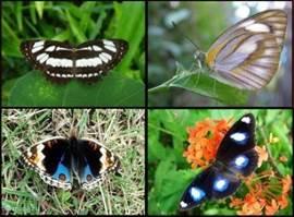 Ook zitten er veel vlinders in de tuin.