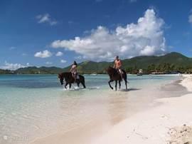 Paardrijden op Le Galion.