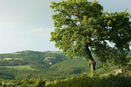 Achtergrond Podere Grignano