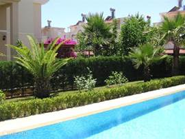 dit is het zicht op de tuin achter het zwembad vanaf het terras gezien. Dit gedeelte van de tuin is voorzien van 5 palmbomen met in het midden een dadelpalm.
