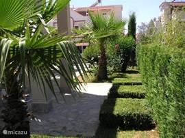 privé tuin met kruidentuin