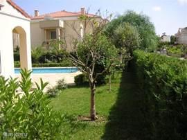 De tuin met een olijfboom, palmen, sinaasappel- en citroenbomen.