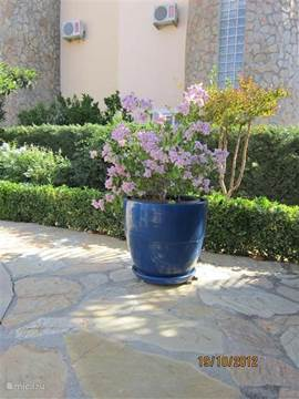 Op het terras naast het zwembad een sfeervolle plantenbak