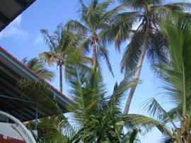 Palms on the seaward side