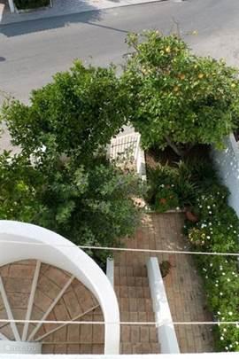 De achtertuin vanaf het terras gezien. Een patio met buitendouche om het zand van je af te spoelen en een citroen- en sinaasappelboom.
