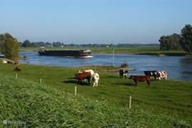 Langs de IJssel kunt u eindeloos fietsen en genieten van de mooie uiterwaarden en rivier. U raakt onderweg het zicht op de rivier slechts zelden kwijt.