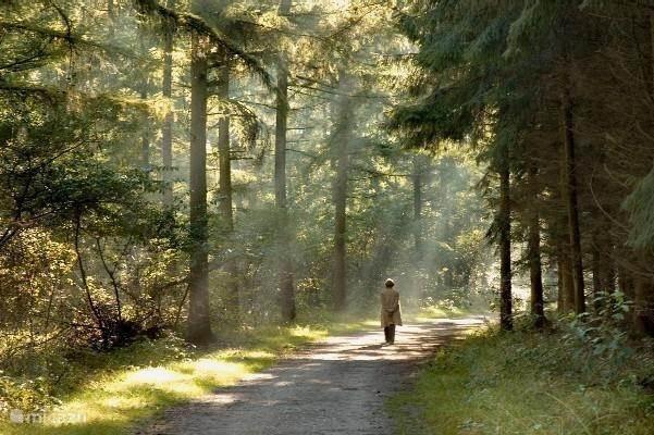 Bosrijke omgeving