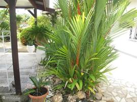 De tuin herbergt 14 palmsoorten: de Rode palm (de Lipstickpalm) is de beauty onder de palmen.