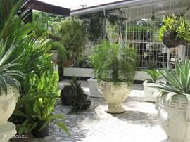 Het zijterras van het huis; vanuit de oprijlaan en het terras komt u op het overdekte en beveiligde voorterras.