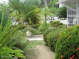 De voortuin wordt met veel zorg onderhouden. Dankbare planten zoals de Yuca, de Ponytailpalm en de Faya Lobi zijn een lust om naar te kijken.
