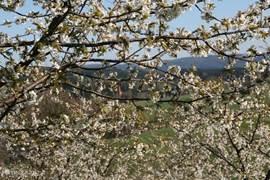 Voorjaar in Cermna