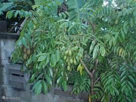 Sterappels groeien zo aan de boom en wachten om geplukt te worden en door u gegeten.