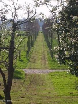 Het Elisabeth-laantje, wandelroute