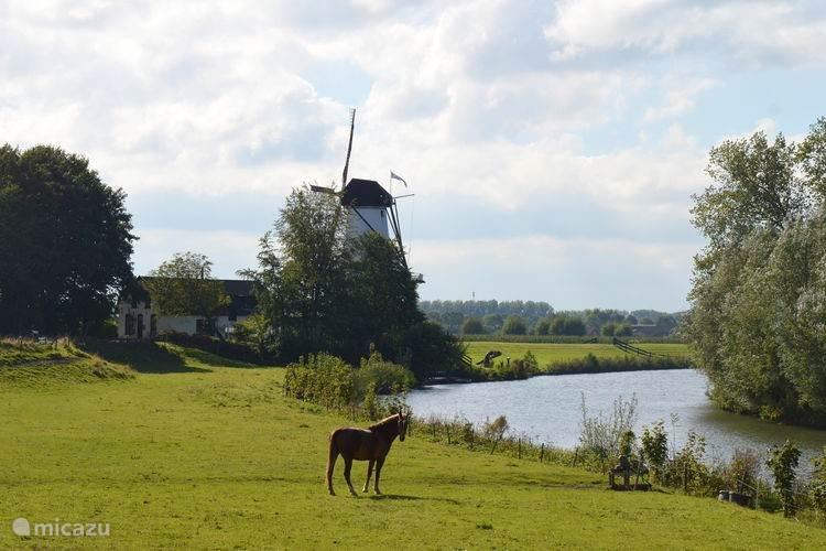Omgeving Koetshuis 600 meter lopen richting de Appeldijk.