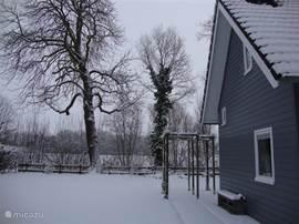 kastanje in de sneeuw