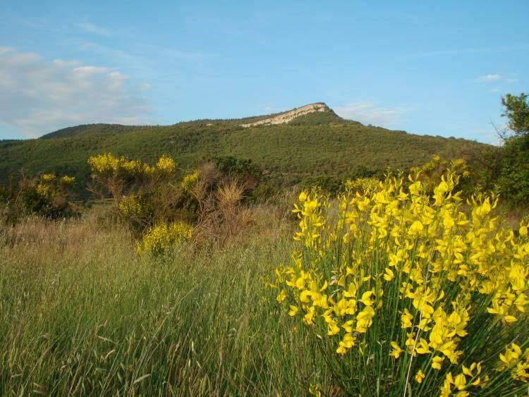 Een prachtmaand in de Languedoc met naast huis bloeiende wilde brem! Nu van 699,- per week voor 629,- per week van 6 - 20 mei. Kom genieten!