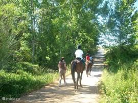 Paardrijden in de omgeving