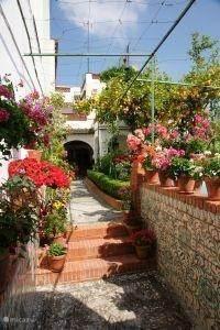 Een Carmen (binnentuin)