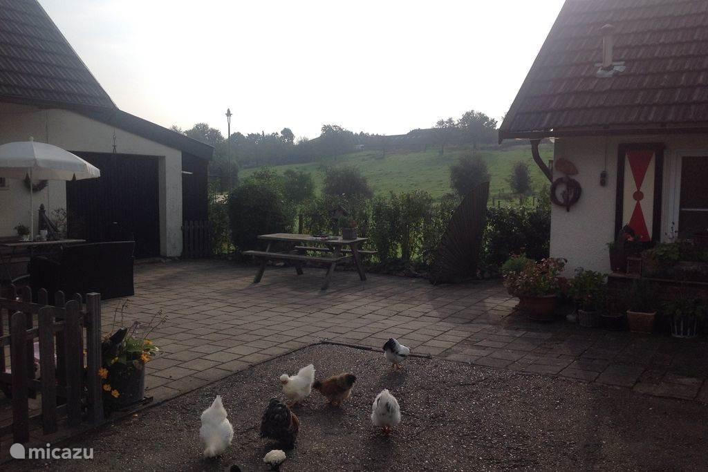 onze Haan en de kippen
